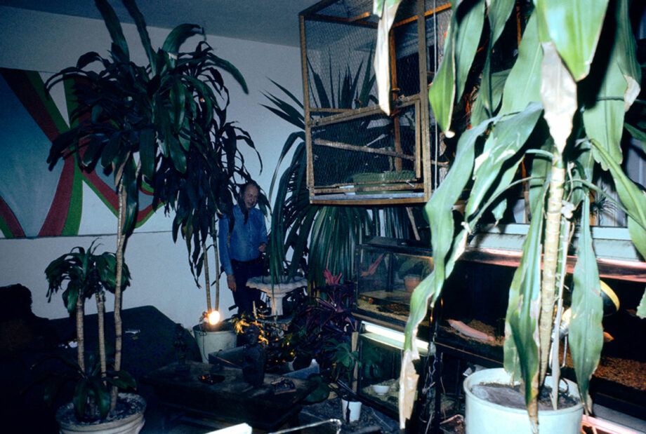 galerie-ahlers-albert-schoepflin-22-Dschungel