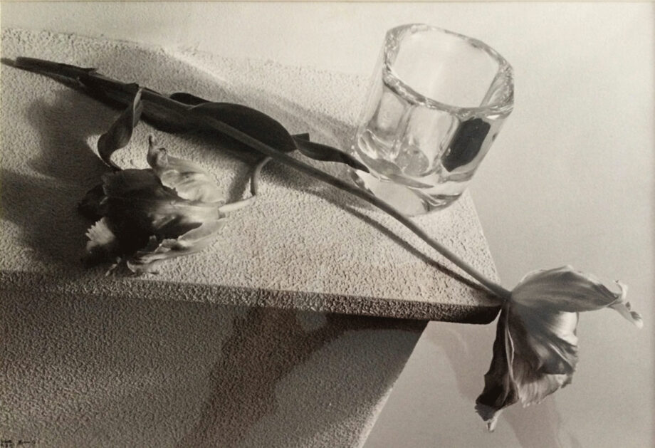 alerie-ahlers-fotografie-ilse-bing-Tulpen