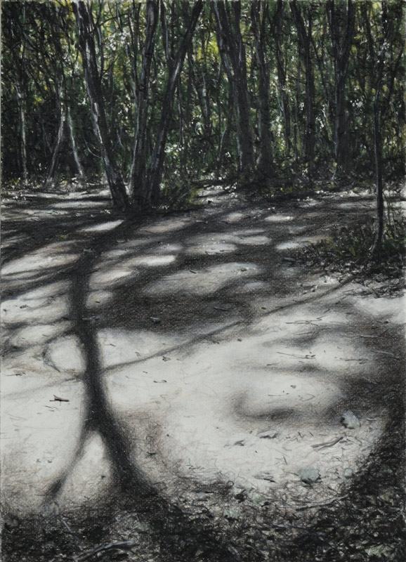 galerie-ahlerserlinde-Zantis-Dépt-07-Bois-de-Païolive-XVII-2020